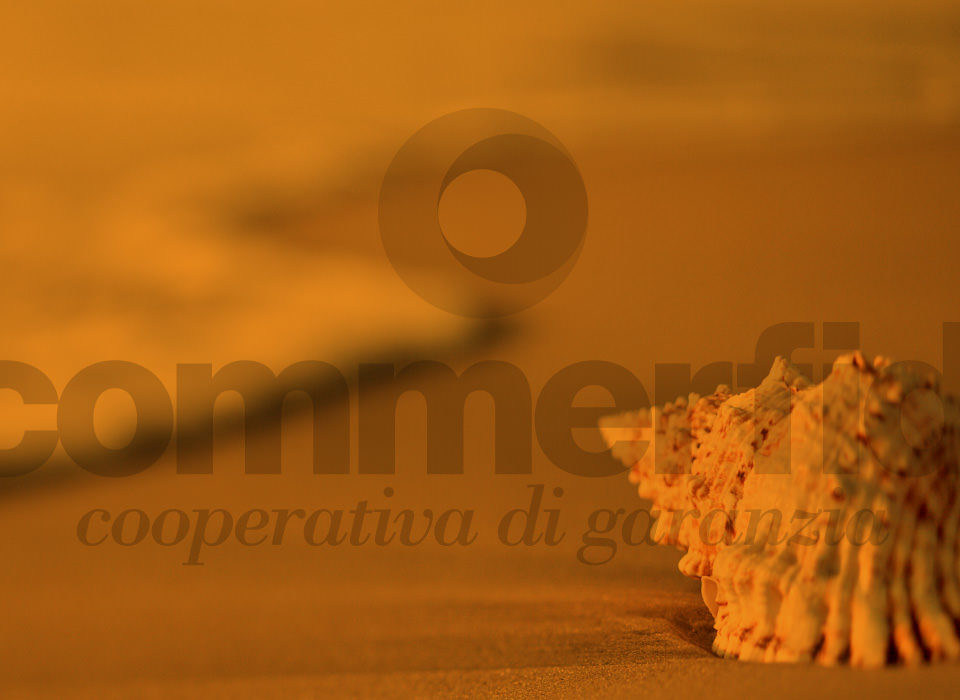 Commerfidi_buone vacanze